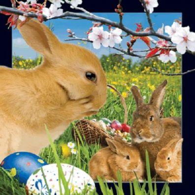 Pocztówka 3D. Wielkanocne króliczki