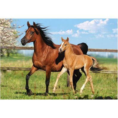 Puzzle 260 Mare AND Foal - Castorland